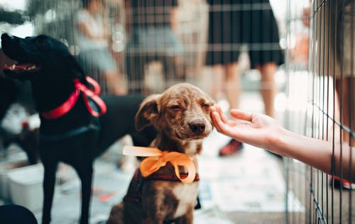Viral Rescue Dogs That We Love
