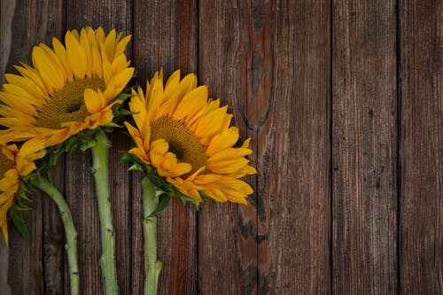 Data Reveals That Sunflower Bouquets Are the Most Popular for Weddings